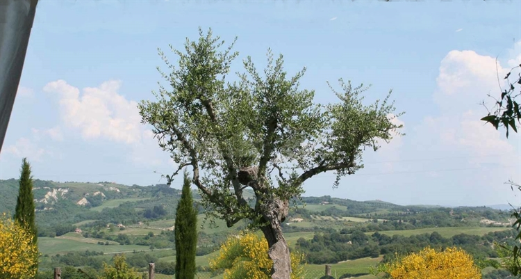 farm with vineyard montalcino - 10