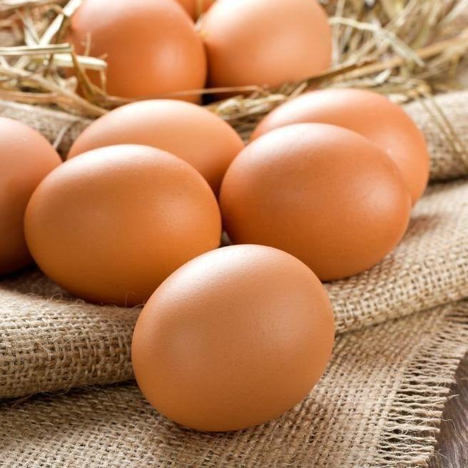 regenerative eggs farm macedon - 4