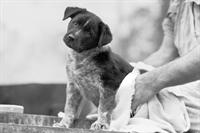 absentee run pet grooming - 1