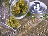 franchised medical cannabis health - 1