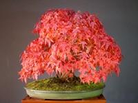 pleasure to run bonsai - 2