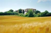 estate farm montalcino for - 3