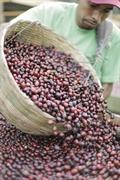 15 acre coffee farm - 3