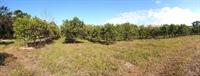 50 acres farm southern - 3