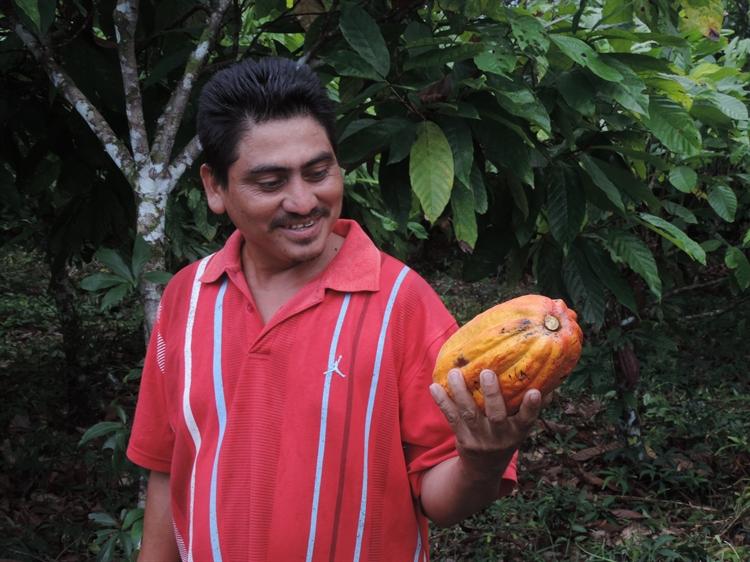 teak cacao farm - 9
