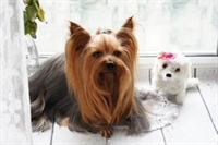 busy pet grooming business - 1