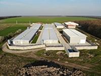 peking duck breeding farm - 1