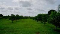 organic ranch farm property - 2