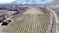 twenty acres orchard oliver - 1