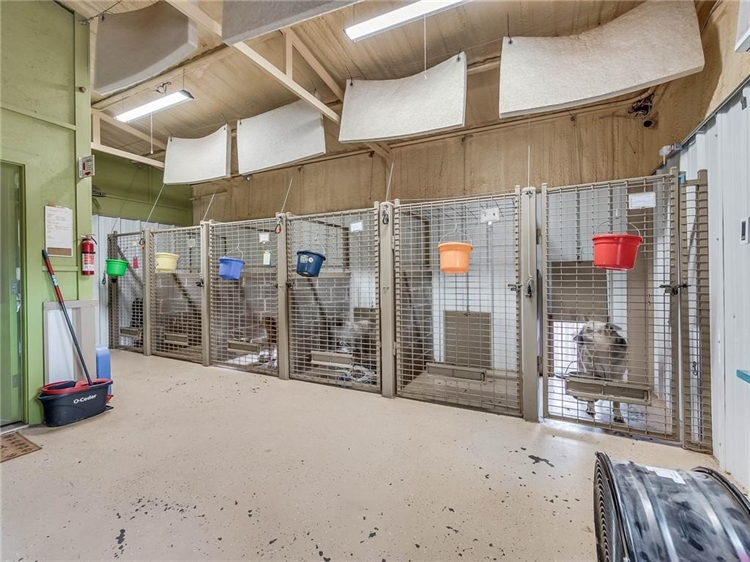 thriving dog ranch daycare - 9
