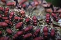 full service pest control - 3