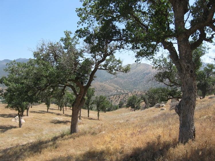 outdoor hospitality retreat california - 4