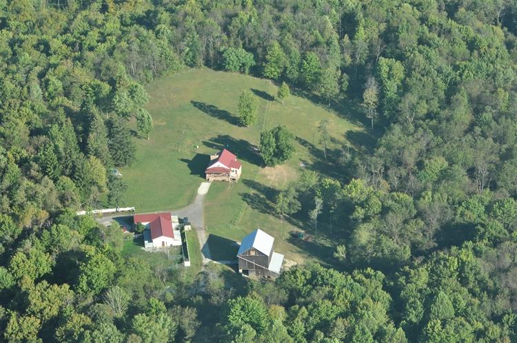 pet resort horse farm - 12