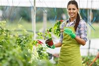 21164 horticulture supplies stock - 1