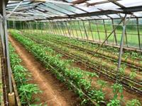 horticultural nursery currently ran - 2