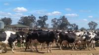 dairy farm business freehold - 1