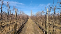 twenty acres orchard oliver - 3