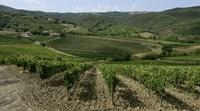 wine farm for sale - 2
