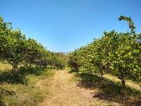 50 acres farm southern - 1