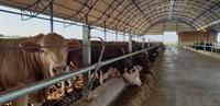affordable farm 27 000 - 1