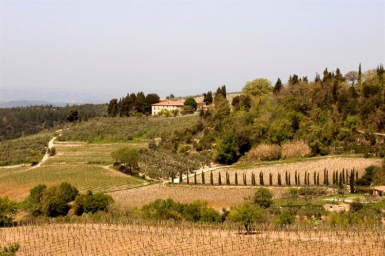winery tuscany - 8