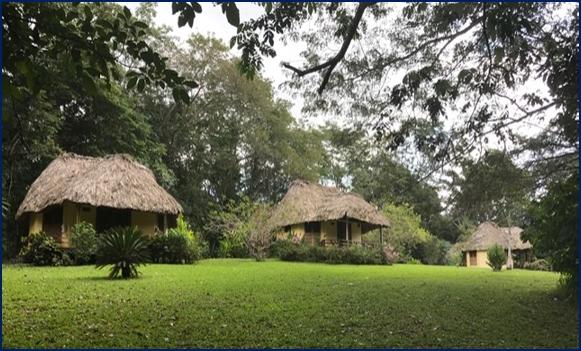 belize tropical jungle resort - 6