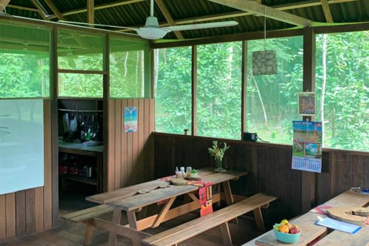 ecolodge 117 acres rainforest - 8