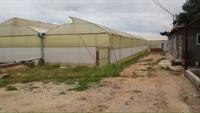 dutch roses farm exports - 1