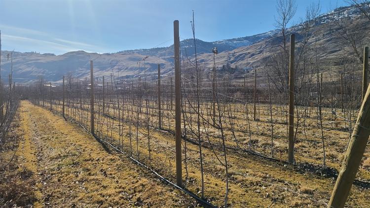 twenty acres orchard oliver - 4