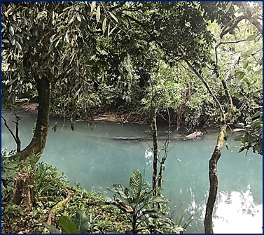 belize tropical jungle resort - 14