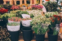 nationally known florists suffolk - 1