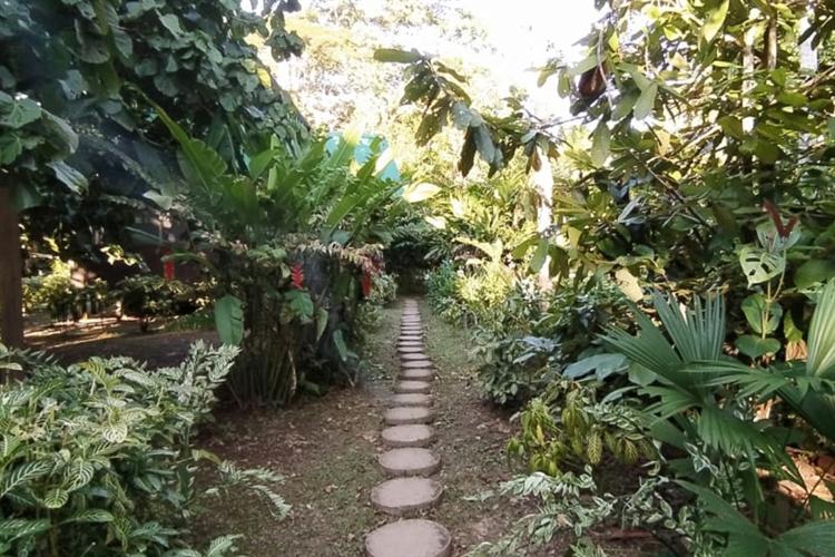 ecolodge 117 acres rainforest - 6