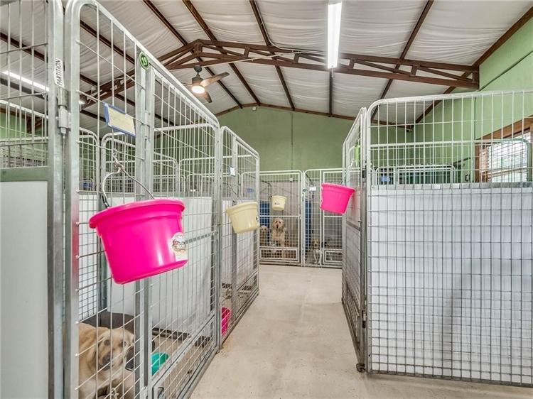 thriving dog ranch daycare - 5