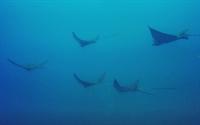 established dive center costa - 1