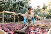 15 acre coffee farm - 1