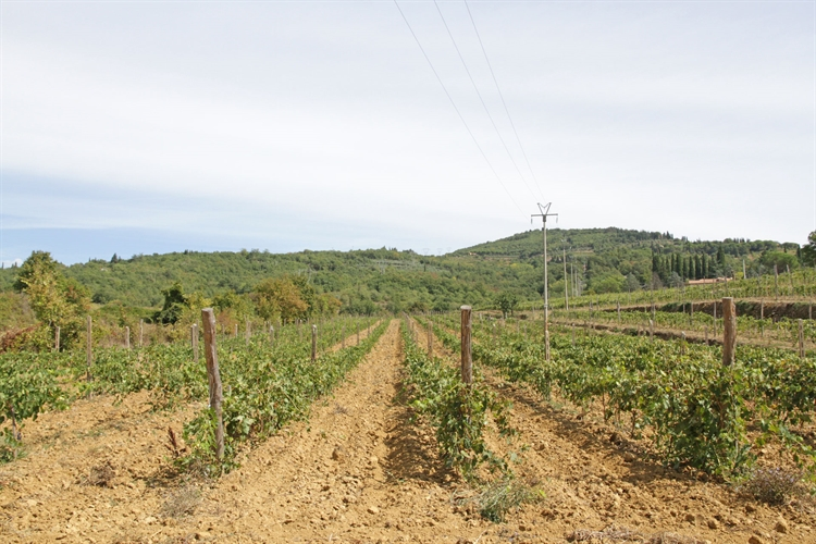 winery tuscany for sale - 9