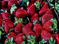 extremely profitable fresh fruit - 1
