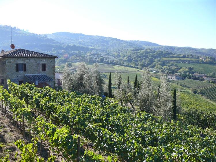 wine farm for sale - 9