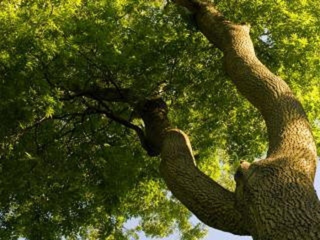 tree service business nassau - 4