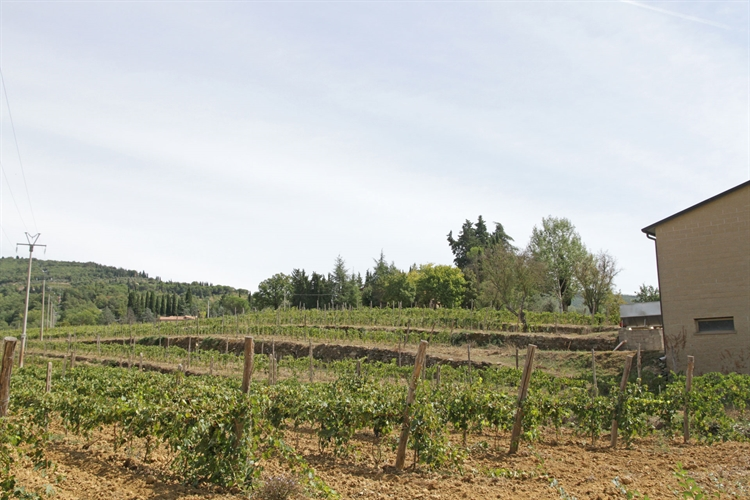 winery tuscany for sale - 8