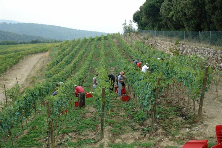 wine farm for sale - 5