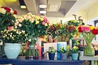 deluxe flower shop mecklenburg - 1