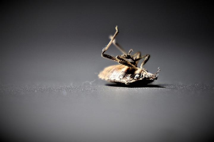 long time pest control - 4