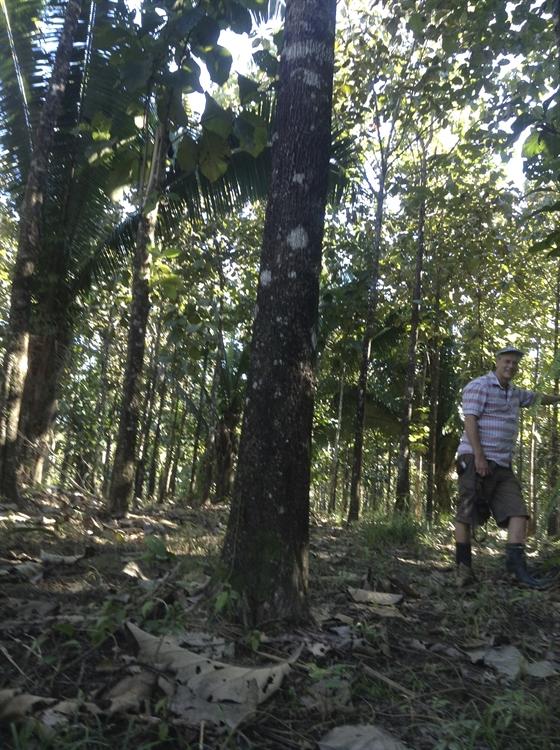 teak cacao farm - 6