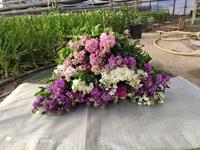 flower farm 0 6 - 1