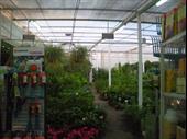 florist garden center limassol