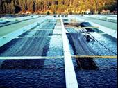 Fish Farm Business Investment Opportunity In Romania For Sale